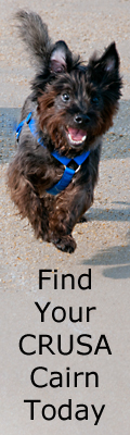 Find Your Cairn Terrier Rescue Dog Today